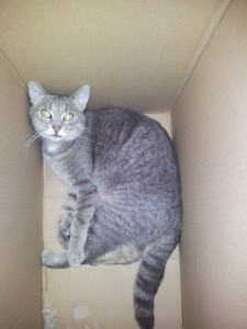 daisy sitzt im karton