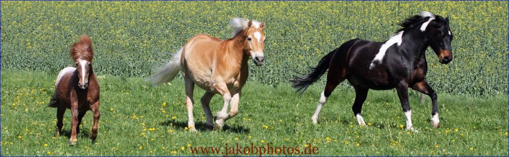 pferdefotograf 28.04.2012 180